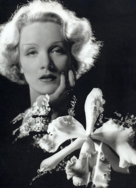 Marlene Dietrich Annex2: Portrait Photographers