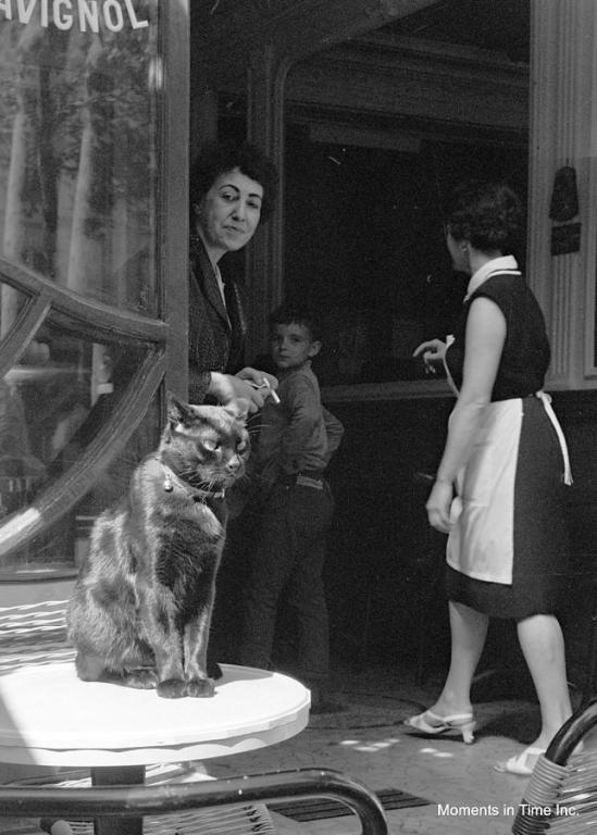 pet-cafe-ii-paris-1960s-glenn-mccurdy