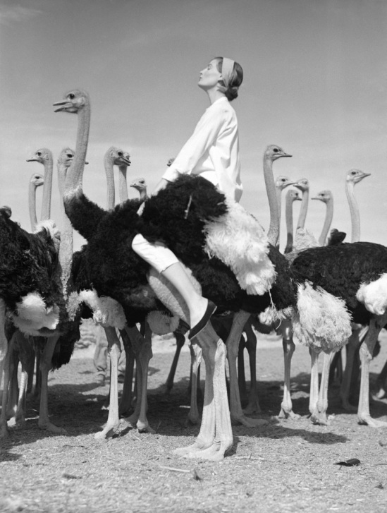 norman-parkinson-wenda-and-ostriches-south-africa-for-vogue-1951
