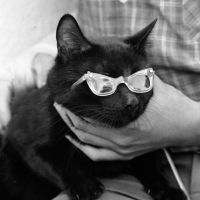 The Black Cat Audition in Hollywood (1961)