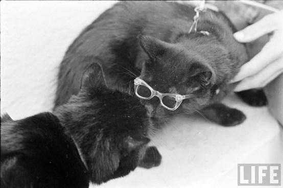 blackcats61