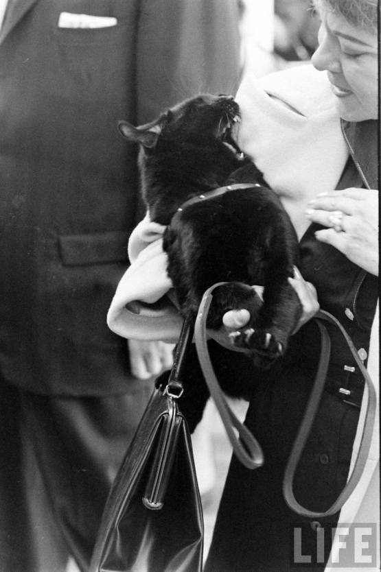 cat1961