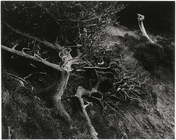 007_edward-weston_theredlist